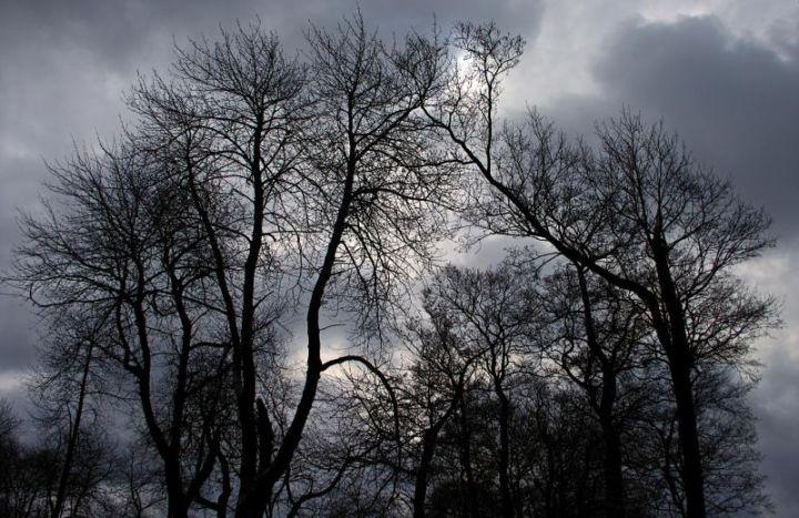 treebreath